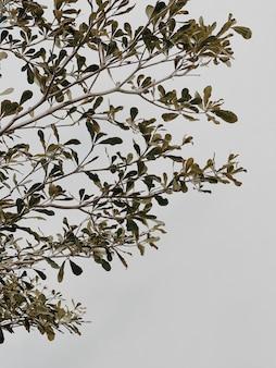 緑の植物の枝、ニュートラルベージュのコンクリートの壁の葉