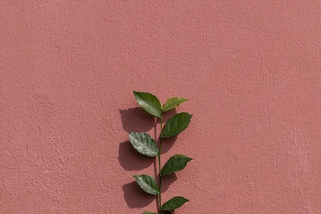 Ветвь зеленого растения на окрашенной кирпичной стене на естественном светлом фоне
