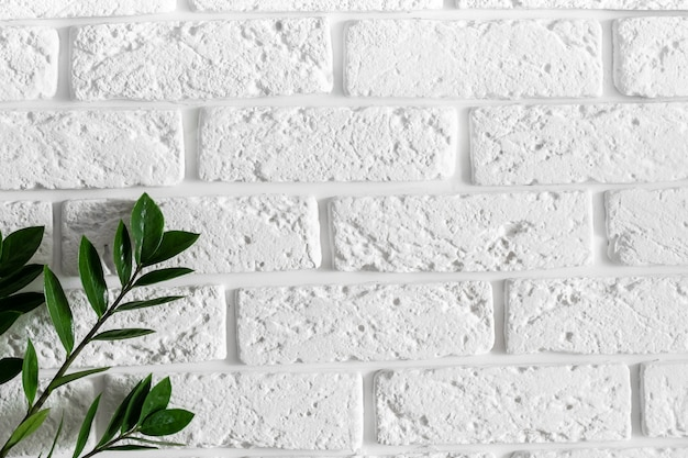 Ветвь зеленого растения на белой кирпичной стене современный домашний интерьер фон, натуральные листья на чистой пустой текстуре бетон цемент картина поверхности кирпичная кладка с копией свободного пространства для текста
