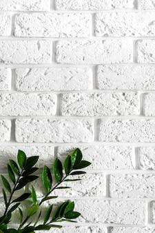 Ветвь зеленого растения на белой кирпичной стене современный домашний интерьер фон, натуральные листья на чистой текстуре бетон цемент картина поверхности кирпичная кладка, вертикальное изображение с копией пространства для текста