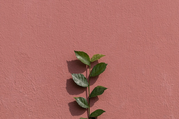 Green plant branch on a painted brick wall in natural light background