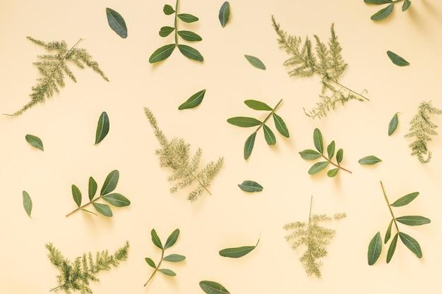 녹색 식물 가지 노란색 배경에 흩어져
