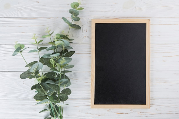 Green plant branches with blank chalkboard on table