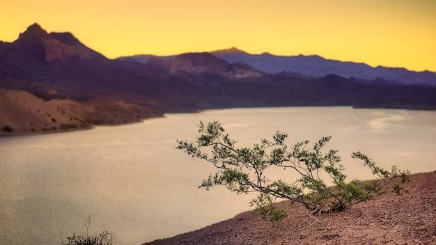 Pianta verde su terreno marrone vicino al lago durante il giorno