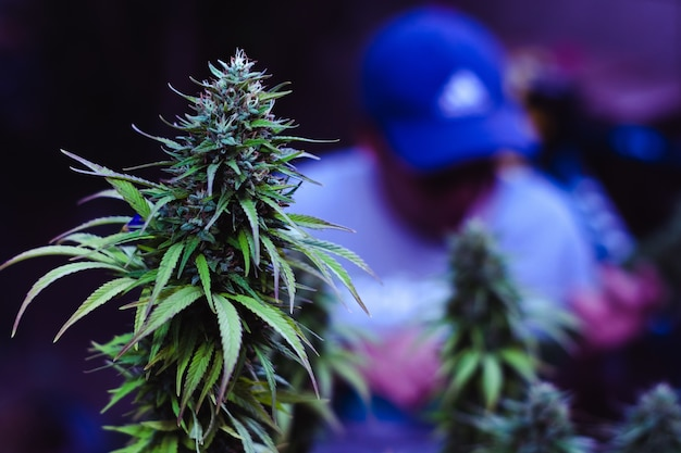 緑の植物のクローズアップ