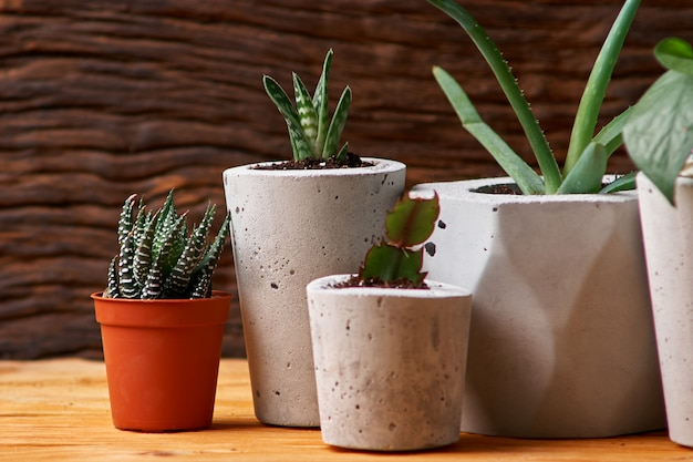 Green plant in a concrete pot, creative home decoration. on wooden background