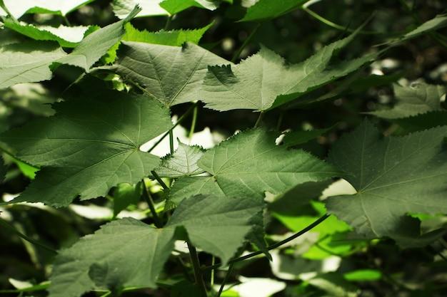 Goグリーンコンセプトのグリーンプラント