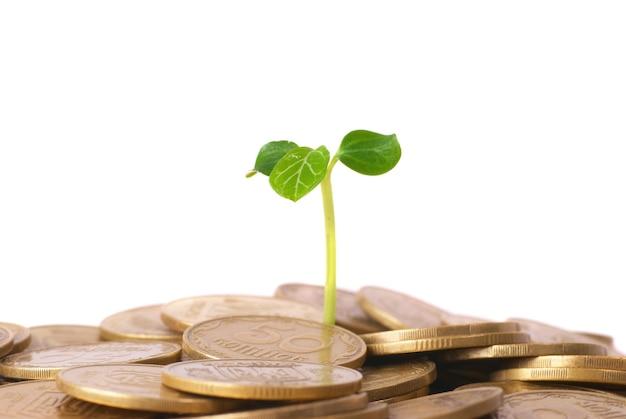 コインから育つ緑の植物。お金の財務概念。