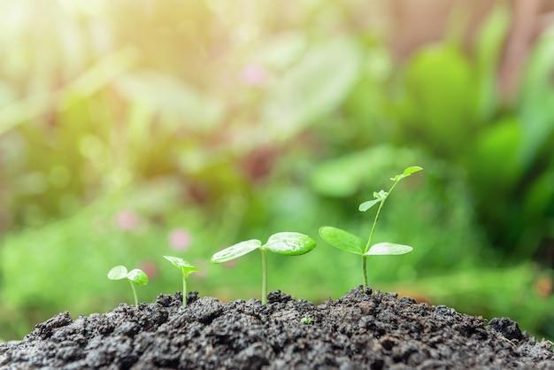 ぼやけた緑で育つ緑の植物