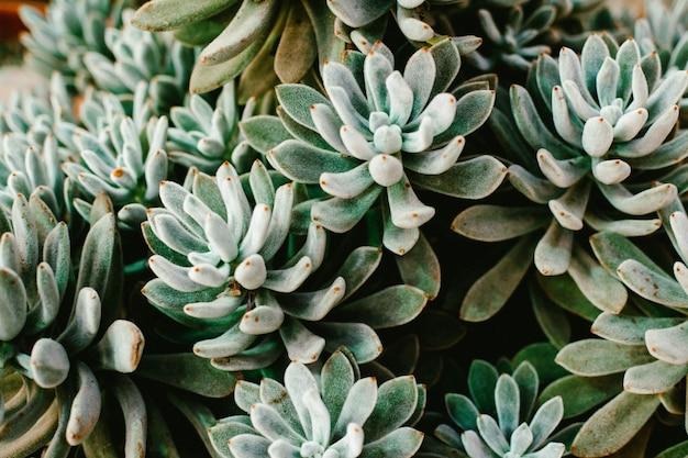 온실에서 녹색 식물