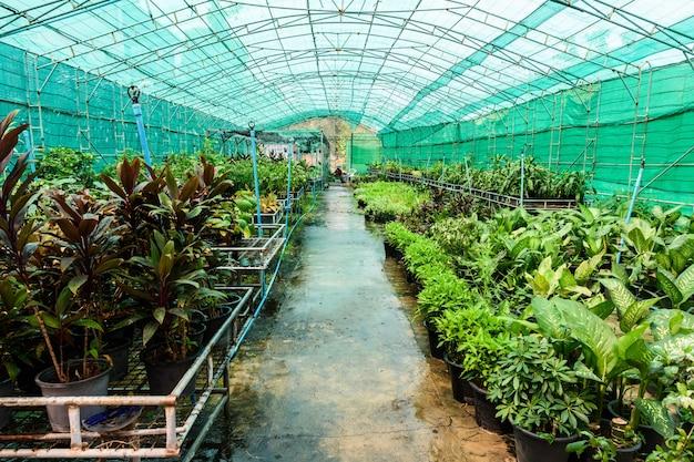 작동 중인 보육원 급수 시스템의 녹색 식물