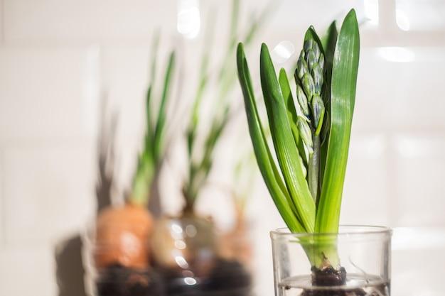 キッチンのガラスの緑の植物homegarden背景