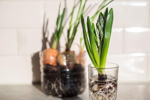 キッチンのガラスの緑の植物