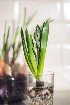 キッチンのガラスの緑の植物 Premium写真