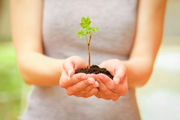 자연 공원에 손에 녹색 식물