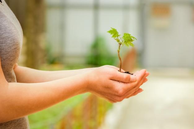 자연 공원에 손에 녹색 식물 프리미엄 사진