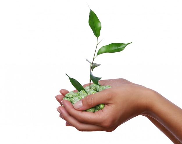 手に緑の植物