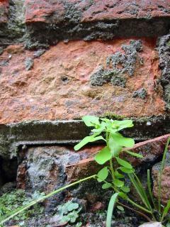 벽돌 벽의 infront 녹색 식물