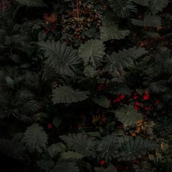 Зеленые листья растений и красные плоды