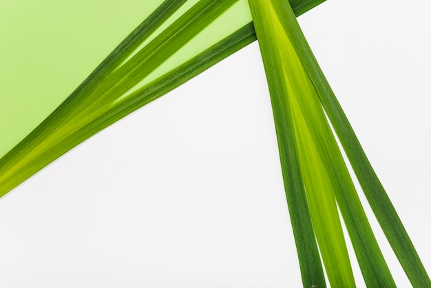 Green plant leaves composition