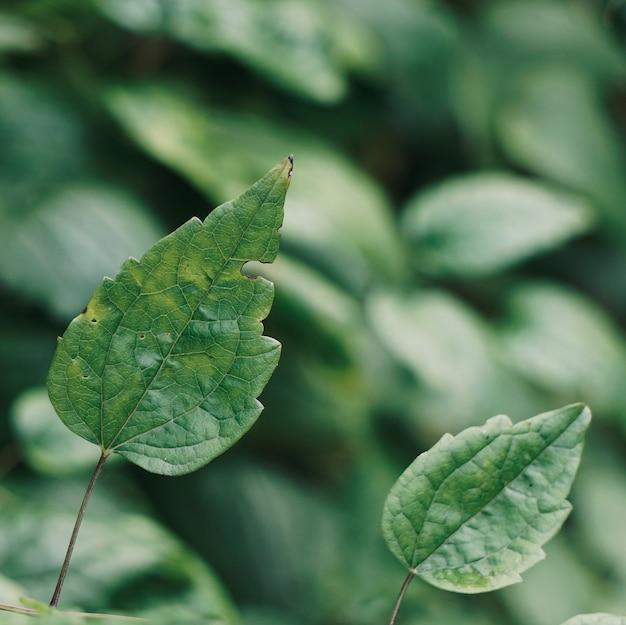 秋の緑の植物の葉