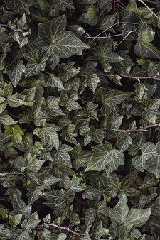 봄 시즌, 녹색 배경에 녹색 식물 잎