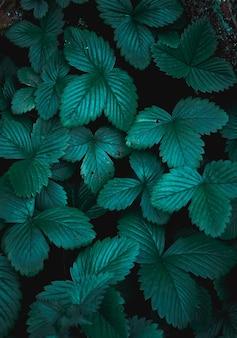 봄 시즌에 녹색 식물 잎 프리미엄 사진