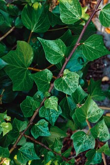 자연, 녹색 배경에 녹색 식물 잎