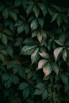 가을 시즌 녹색 배경에 자연에 녹색 식물 잎
