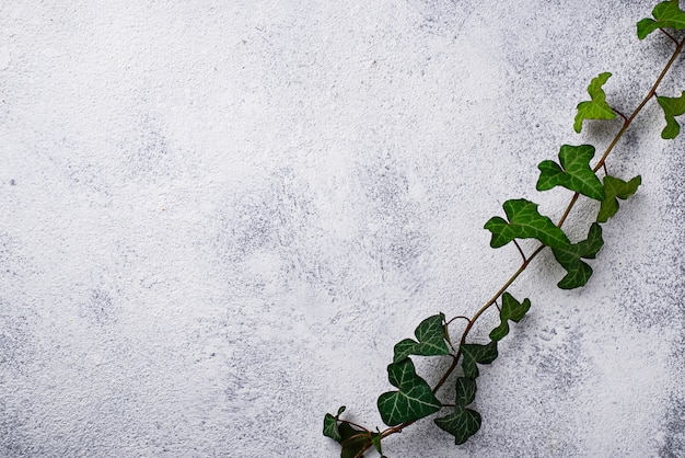 Green plant on light background