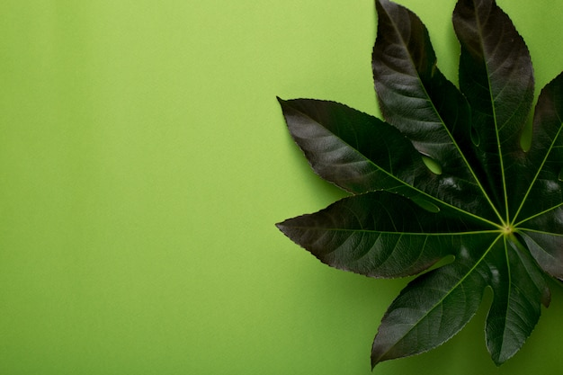 Green plant o greeen backgound