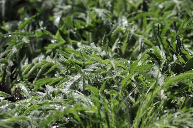 비가 오는 화창한 날에 녹색 식물 잔디와 꽃의 땅 근처에 젖은 잎 신선한 잎