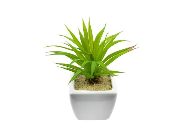 分離された白い鍋の白い背景の上の緑の植物。