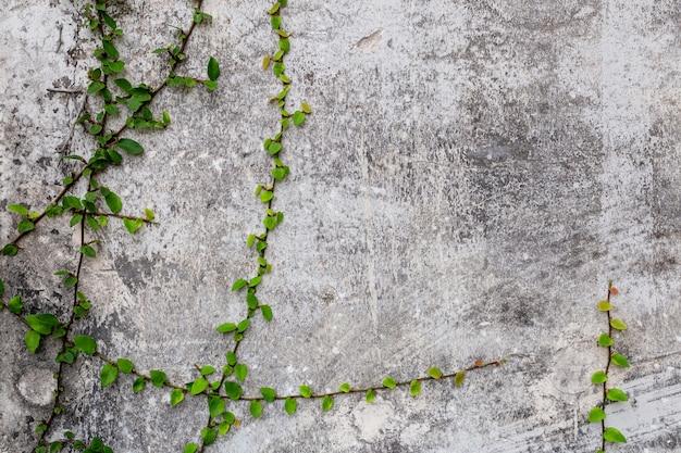 Зеленое растение на бетоне гранж