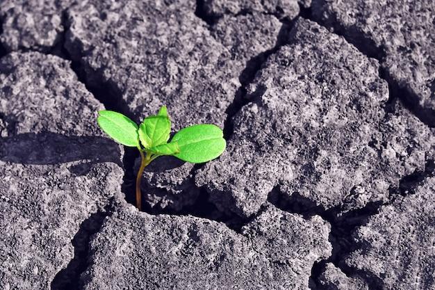 乾燥したひびの入った土壌を通る緑の植物の芽