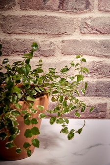 Green plant in a terracotta pot with a background of reddish bricks