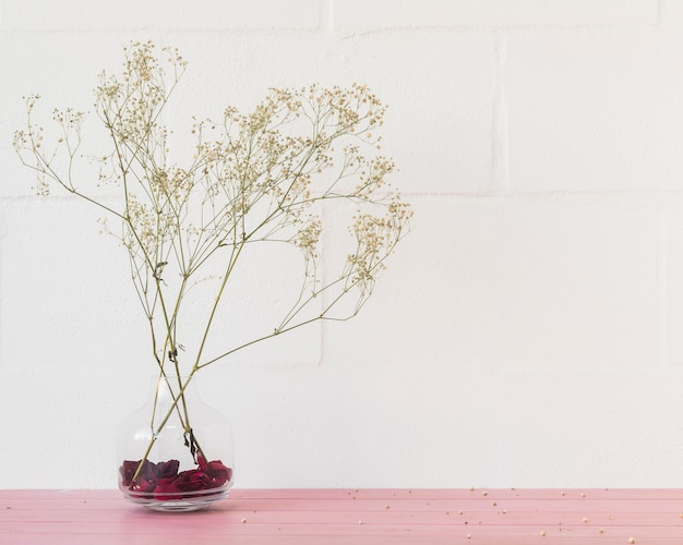 Green plant twigs in vase near wall