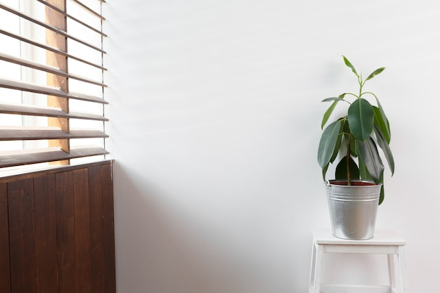 Green plant in a vase decorated for room