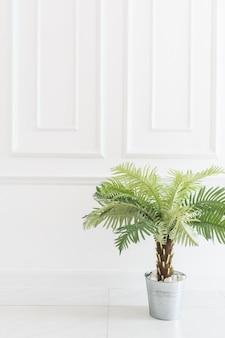 녹색 식물 흰색 밝은 장식