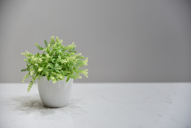 Green plant in white ceramic pot and gray blackground