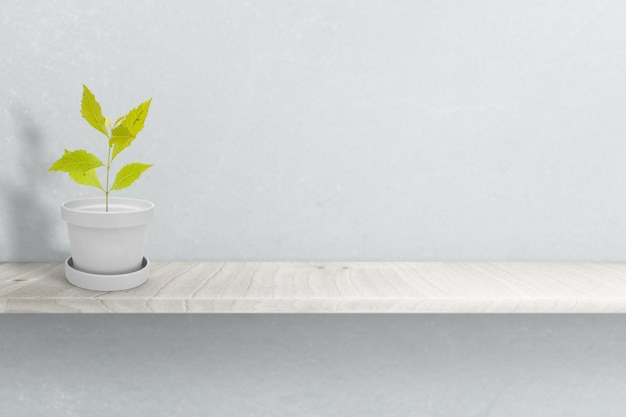Green plant on white pot (vase), isolated on white