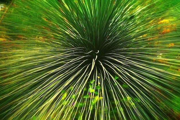 잎을 가진 녹색 식물