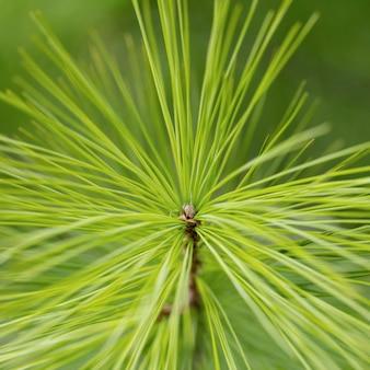 긴 잎을 가진 녹색 식물