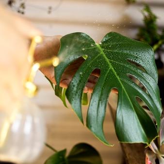 Зеленое растение с каплями воды крупным планом