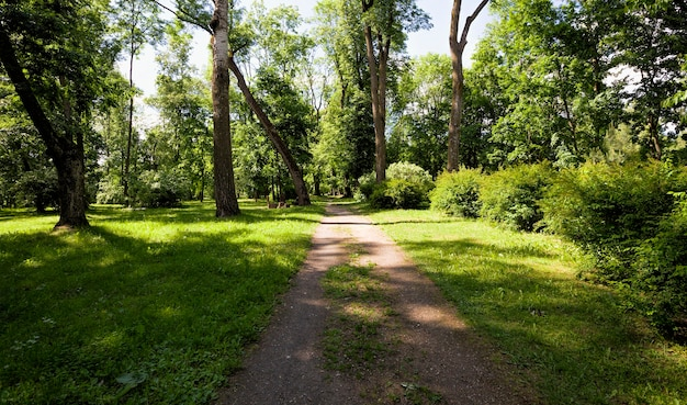 공원을 걷는 동안 녹색 식물과 나무, 엔터테인먼트 및 자연 산책