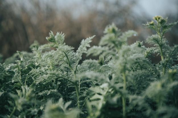 Green plants in a field