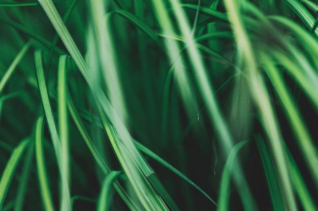 美しいパターンを形成する緑の植物