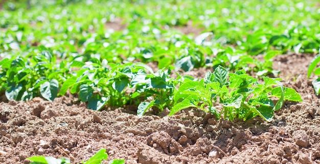 Зеленые растения растут из земли