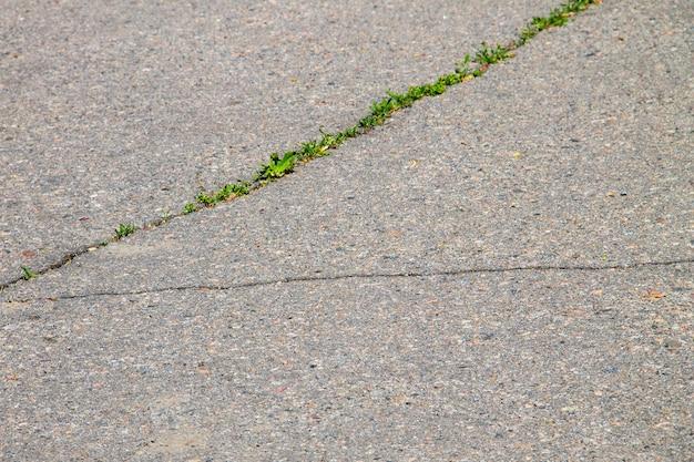 Зеленые растения, растущие в потрескавшейся асфальтовой дороге