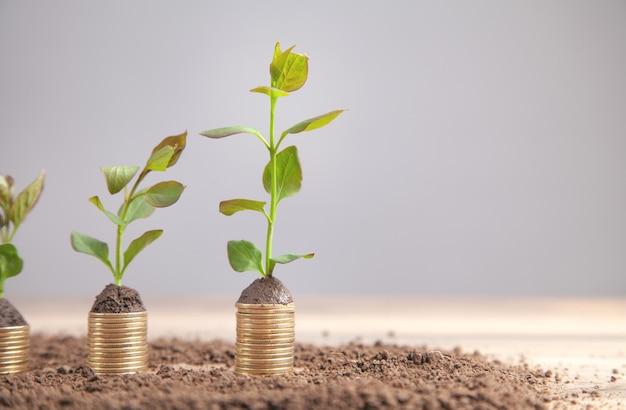 Зеленые растения, растущие на золотых монетах. инвестиции. выгода. рост. успех